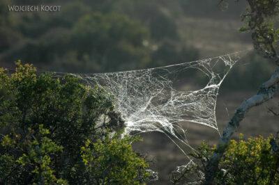 SA15392-Owadzie pajęczyny nadrzewach