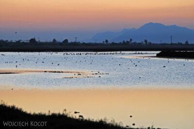 Ali-3035-Słone poldery wieczorem