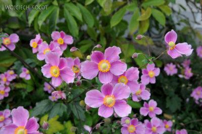Por25048-Kwiatuchy