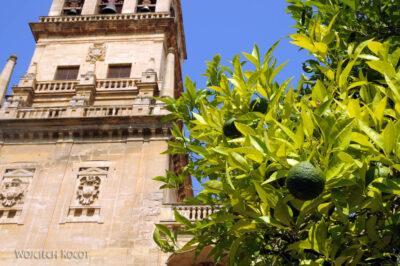 Por08088-Mezquita Catedral de Córdoba