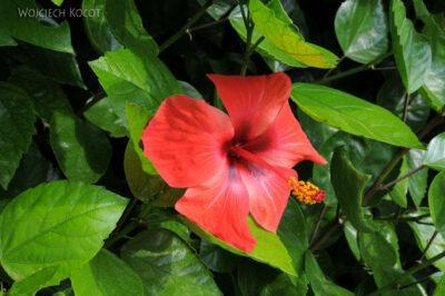 Por08101-Kwiat