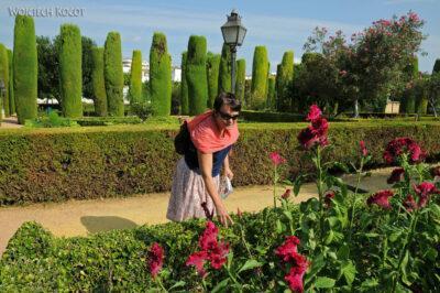 Por08116-Jardines Del Alcázar