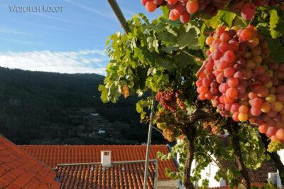 Por18008-Manteigas - Casa de Sao Roque - winogrona nabalkonie