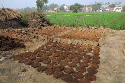 IN04163-Agra-Krowie placki