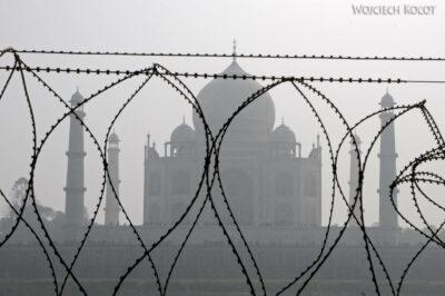 IN04175-Agra-Widok naTaj Mahal zParku Mehtabh Bagh