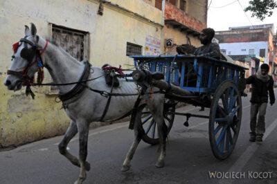 IN04317-Agra-Chuda szkapina ijej rydwan