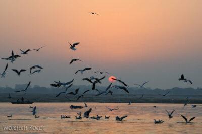 IN09003-Waranasi-wschód słońca nadGangą