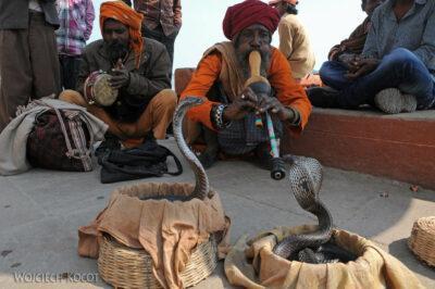 IN10046-Waranasi-zaklinanie kobry