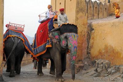 IN24019-Jaipur-Malowane słonie