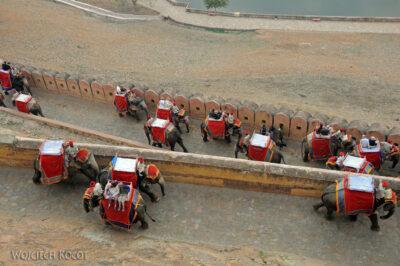 IN24026-Jaipur-Malowane słonie