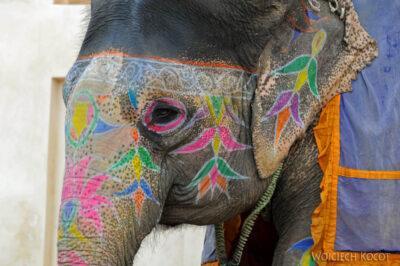 IN24098-Jaipur-Malowane słonie