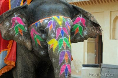 IN24101-Jaipur-Malowane słonie