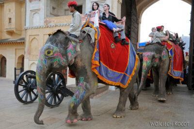 IN24102-Jaipur-Malowane słonie