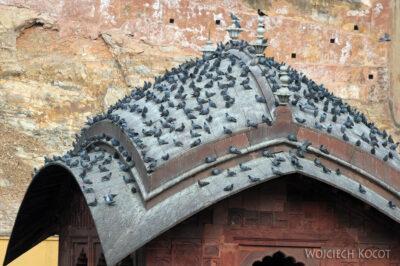 IN24116-Jaipur-Amber Palace - ptaszyska
