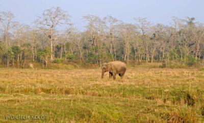 IN15032-Słonie wparku Chitwan