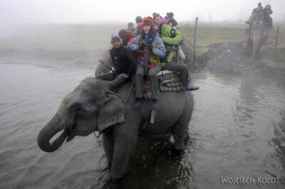 IN16009-Chitwan-na słoniu przezrzekę