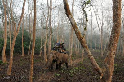 IN16011-Chitwan-Jazda nasłoniu