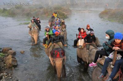 IN16020-Chitwan-na słoniu przezrzekę