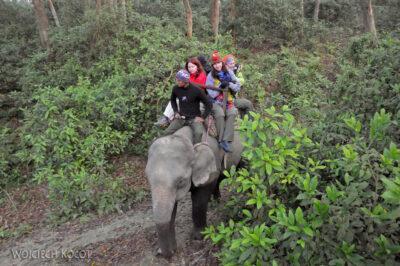 IN16022-Chitwan-Jazda nasłoniu
