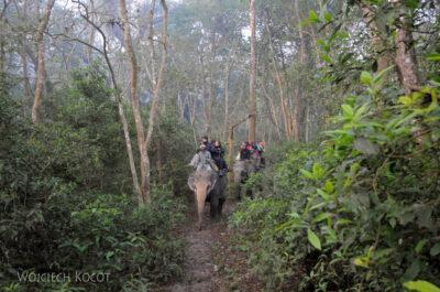 IN16024-Chitwan-Jazda nasłoniu