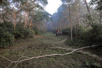IN16028-Chitwan-Jazda nasłoniu