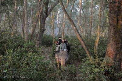 IN16038-Chitwan-Jazda nasłoniu