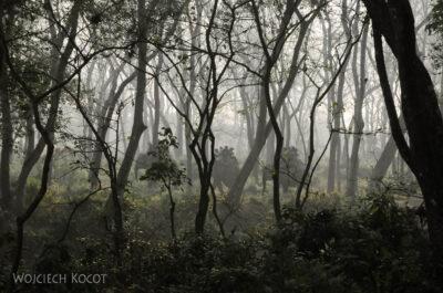IN16039-Chitwan-Jazda nasłoniu