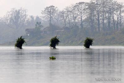 IN16103-Chitwan-krzaki ida przezrzekę
