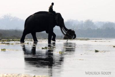 IN16109-Chitwan-transport słoniowy