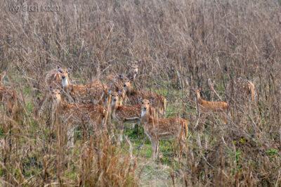 IN16132-Chitwan-sarny