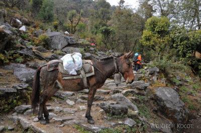IN18056-Treking-dz1-Osiołki lub muły