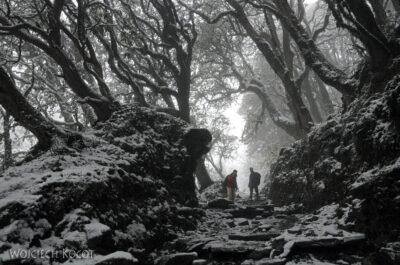 IN19019-Treking-dz2-Po drodze doGhorepani