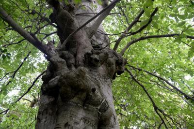 GTj006-Drzewo