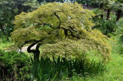 GTj037-Drzewo