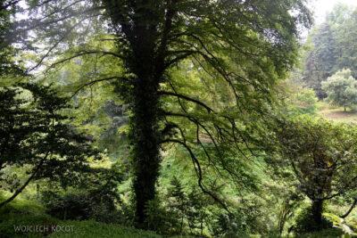 GTj038-Drzewo