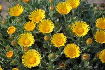 Lan3257-Kwiaty