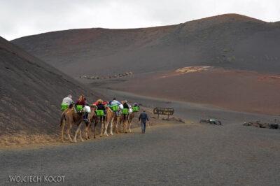 Lan3095-Wielbłądy wParku Timanfaya