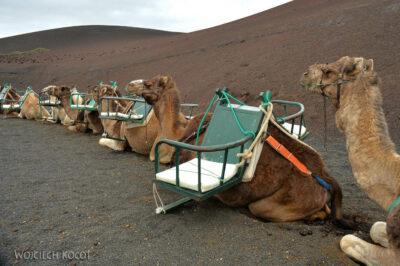 Lan3098-Wielbłądy wParku Timanfaya
