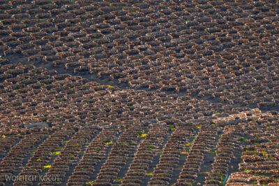 Lan8015-Krater 3 km E odUga - plantacje winogron