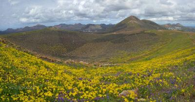 Lan8045-Krater 3 km E odUga - Kwiaty