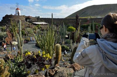 Lan4014-Asia wogrodzie kaktusów