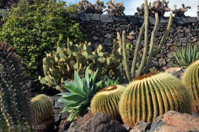 Lan4015-W ogrodzie kaktusów