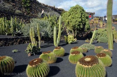 Lan4023-W ogrodzie kaktusów
