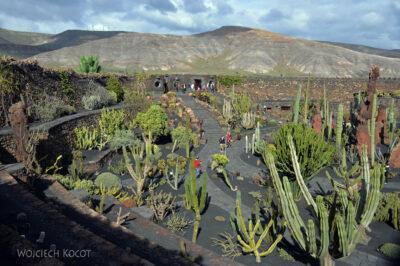 Lan4030-W ogrodzie kaktusów
