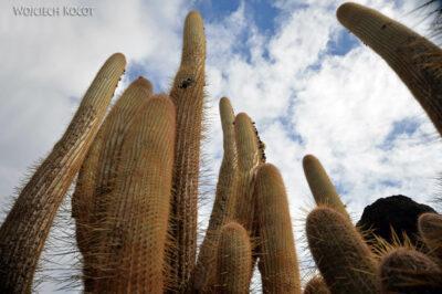 Lan4040-W ogrodzie kaktusów
