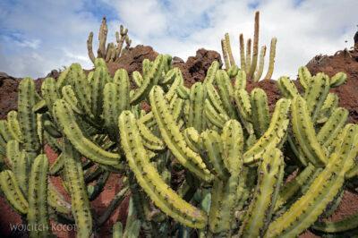 Lan4042-W ogrodzie kaktusów