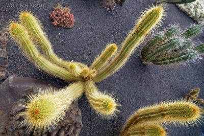 Lan4065-W ogrodzie kaktusów