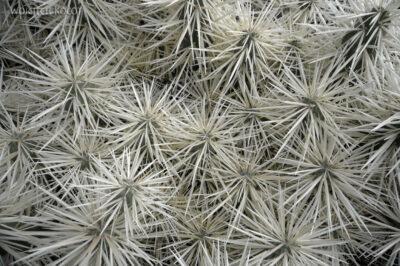 Lan4069-W ogrodzie kaktusów