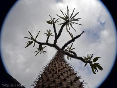Lan4077-W ogrodzie kaktusów