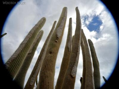 Lan4081-W ogrodzie kaktusów